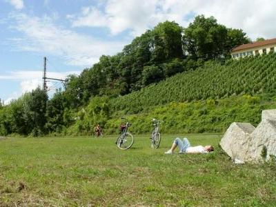Weinberge, main, Radreisen, fahrrad, wiese, berge, natur, radpause